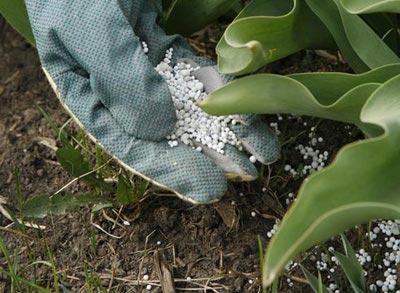 Химия для растений