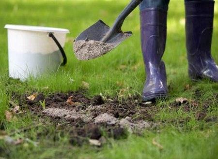 Подкармливаем растение при выращивании в земле