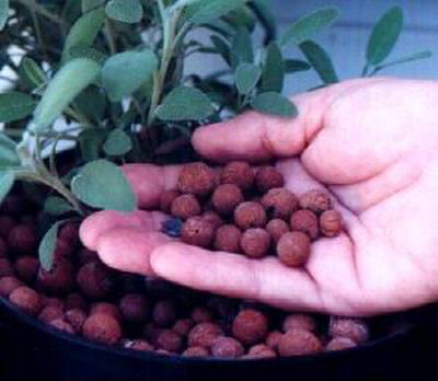 Субстраты для выращивания конопли