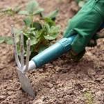Эксперименты с мульчированием почв