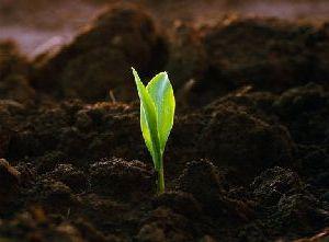 Фекальные удобрения для почвы