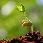 Стимуляторы роста для вегетации и проращивания семян
