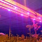 Светильник для теплицы: как определить необходимый уровень освещенности