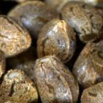 Как выбрать лучшие семена