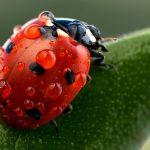 Секреты выращивания — дружелюбные хищники и компостный чай
