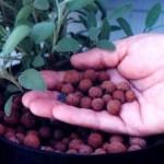 Почва или субстраты для выращивания