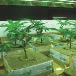 Системы непрерывного роста в оранжерее