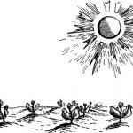 Добавки, которые способствуют повышению урожая