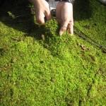 Земляные смеси из сфагнума