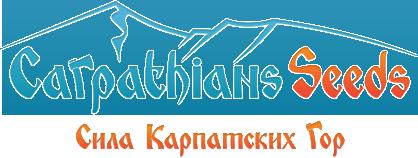 Новые сорта от CarpathiansSeeds