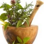 Средства защиты конопли от вредителей. Травяные настои