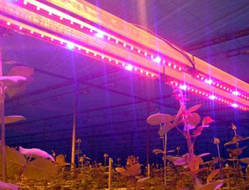 Светильник для теплицы как определить необходимый уровень освещенности