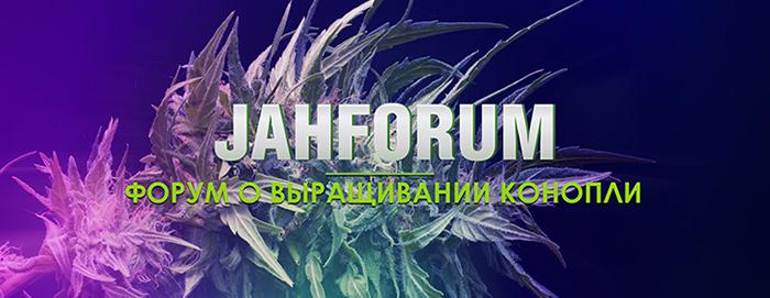 jahforum, форум о выращивании конопли,