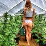 Как поливать марихуану ?