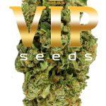 Дебютная линейка стрейнов от VIP Seeds уже в продаже