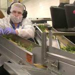 Роботы – ключ автоматизации к недорогому производству каннабиса: говорит Aphria
