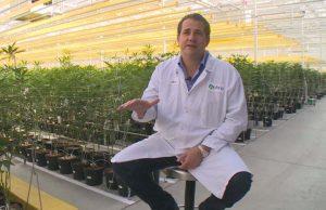 автоматизация производства, производство конопли, производство марихуаны, марихуана, конопля,