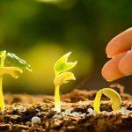 Важность использования удобрения в аутдоре